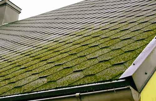 Roof Moss t